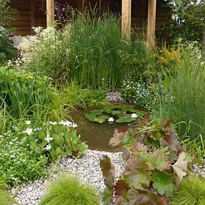 Buy pond plants online british native aquatic plants for Small garden pond plants